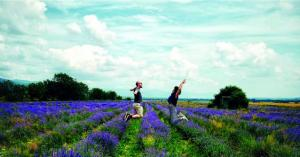 On the road: lavender fields forever